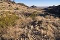 Copper Kettle Canyon - Flickr - aspidoscelis (3).jpg