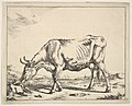 Cow, after Paulus Potter MET DP828254.jpg