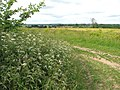 Cow parsley (Anthriscus sylvestris) - geograph.org.uk - 1347290.jpg