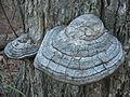 Cracked Mushroom.jpg