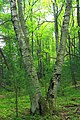 Cranberry Swamp Natural Area (26) (18098907812).jpg