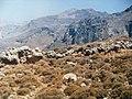 Crete - panoramio (7).jpg