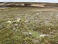 Crow Stones - geograph.org.uk - 905357.jpg