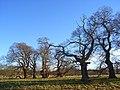 Crowsley Park - geograph.org.uk - 1059486.jpg
