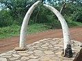 Cultural horns - beauty of the culture of Uganda.jpg