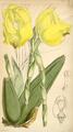 Curtis's Botanical Magazine, Plate 4313 (Volume 73, 1847).png