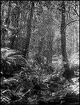 Dantes Glen, Lawson (4903262991).jpg