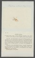Daphnia rotunda - - Print - Iconographia Zoologica - Special Collections University of Amsterdam - UBAINV0274 099 06 0017.tif