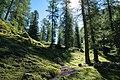 Davos - forest trail.jpg