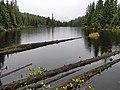 Deadwood in Showh Lake (44872768865).jpg