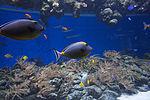 Den Bla Planet Danmarks akvarium 20130427 0407F (8687084084).jpg
