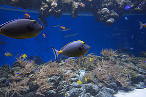 National Aquarium Denmark - Coral reef fish