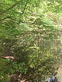 Der flüchtigen Natur ganz nah - in Wasser, Spiegeln und Träume.jpg