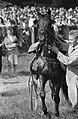 Derby over 2500 meter te Duindigt, winnaar Ybe van Papenhoek, Bestanddeelnr 911-4838.jpg