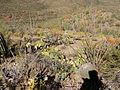 Desert 7 (15314162663).jpg