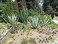 Desert Succulents (41066662845).jpg