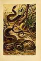 Deutschlands Amphibien und Reptilien (5981667497).jpg