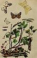 Dictionnaire pittoresque d'histoire naturelle et des phénomènes de la nature (1838) (14778027951).jpg