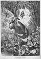 Die Gartenlaube (1873) b 539.jpg
