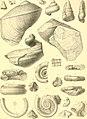 Die Gastropoden des karnischen Unterdevon (1907) (20922309255).jpg