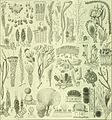 Die Pflanzenwelt (1913-1922.) (20319122103).jpg