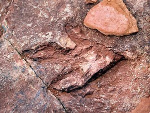 Red Fleet State Park - Probable Dilophosaurus footprint on the trackway