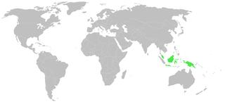 <i>Thorelliola</i> genus of arachnids