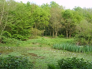 Doctor's Pond One of several ponds in the Lang...