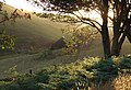 Doethie Evening Sun, Ceredigion - geograph.org.uk - 401471.jpg