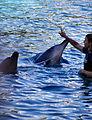 Dolphin Cove 36.jpg
