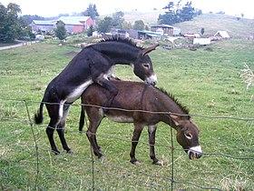 Donkey punch 2.jpg
