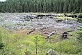 Dried-out beaver lake 02.jpg
