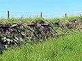 Dry stone wall near Carreg Samson, Sir Benfro in 2021 37.jpg