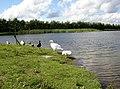 Ducks at Keighley Tarn, Keighley - geograph.org.uk - 495768.jpg