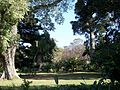 Durban Botanic cycads and trees.JPG