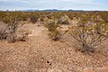 East of the Black Range - Flickr - aspidoscelis (4).jpg