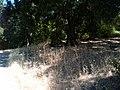 Edenvale, San Jose, CA, USA - panoramio - phxhawke.jpg