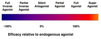 Agonist - Efficacy spectrum of receptor ligands.