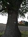 Eiche Naturdenkmal AHA 4 Schilder.jpg
