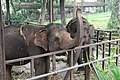 Elephant is eating in the Zoo 2.jpg