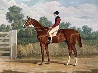 Elis (horse) British-bred Thoroughbred racehorse