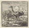 Enkele figuren kijken naar een struisvogel.jpeg