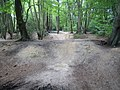 Epping Forest, Loughton Camp - geograph.org.uk - 548902.jpg