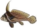 Equetus punctatus - pone.0010676.g095.png