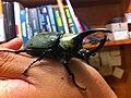 Escarabajo2.JPG