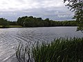 Ewhurst Pond - geograph.org.uk - 173466.jpg