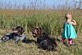 Exploring the prairie (15137013467).jpg