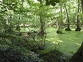 FFM Stadtwald Rohsee 2012 b.jpg