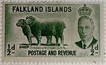Falkland Islands Sheep (1) (20240863280).jpg