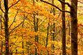 Fall -1 (23493905236).jpg